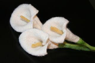Calla lilies 039