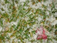 Snowcloseup